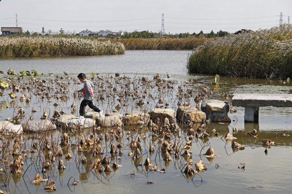 """孩子在宁波杭州湾国家湿地公园内感受""""野趣""""。"""