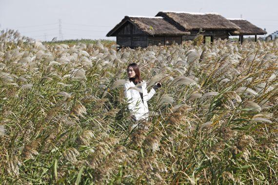 宁波杭州湾国家湿地公园每天吸引着游客前来摄影留念。