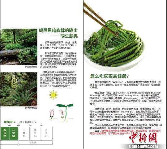 联发彩票合法吗:全面介绍古老蕨类植物的科普手册上海率先发行