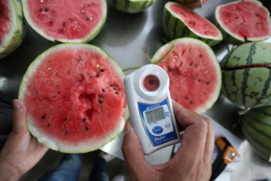 上海桃咏桃业专业合作社出产的西瓜,糖度都保证在11度以上。