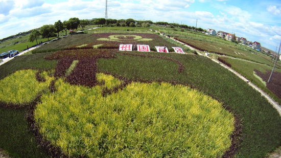 """稻田里呈现""""祖国富强""""图案,迎接国庆。"""