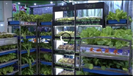 金山爱娥开创有机蔬菜销售新模式 盆栽活体现切大受市场追捧