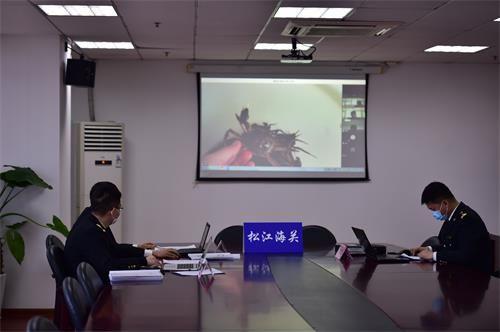 (上海海关开展行政审批网络评审,线上视频核验相关材料)