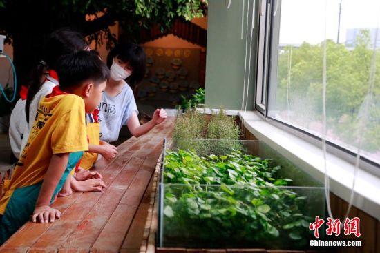 课后,学生在校内的中草药科普实践馆学习中草药知识。 汤彦俊 摄