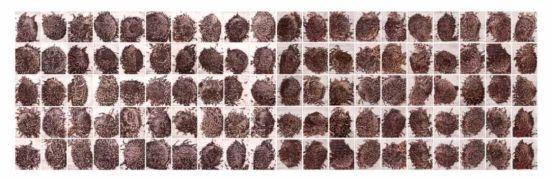 葵园肖像 Portrait of the Sunflower Garden,纸面水彩 64cm×53cm×100,2018