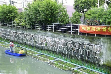 澳门新金沙在线:虹口利用水生植物治理黑臭河道