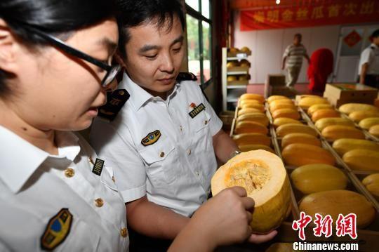金沙娱乐官方总网址:上海崇明金瓜首次出口香港