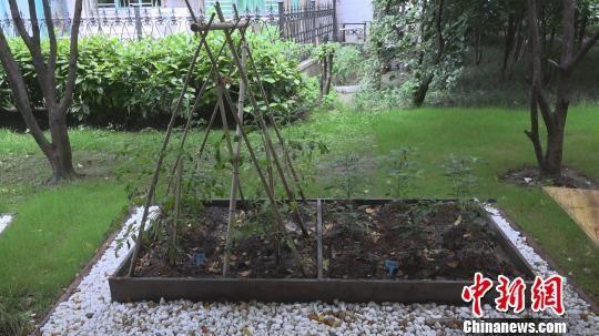 比垃圾处理器更时尚 上海:湿垃圾变废为宝成生态肥
