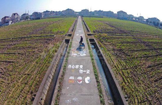 上海田埂边的涂鸦艺术